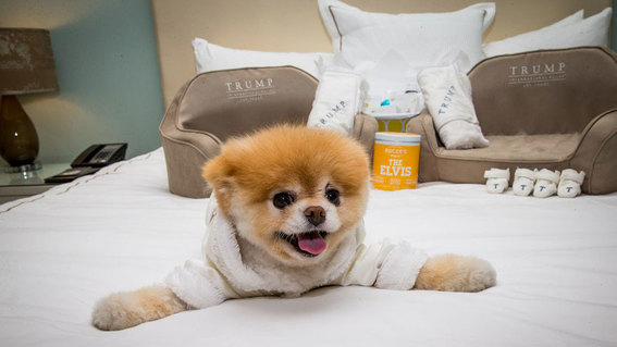 Luxe Pet Hotels - pet hotel las vegas
